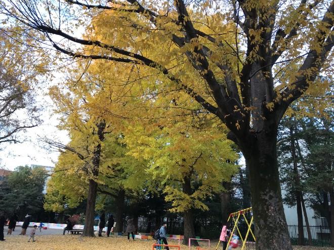 大学近くの公園